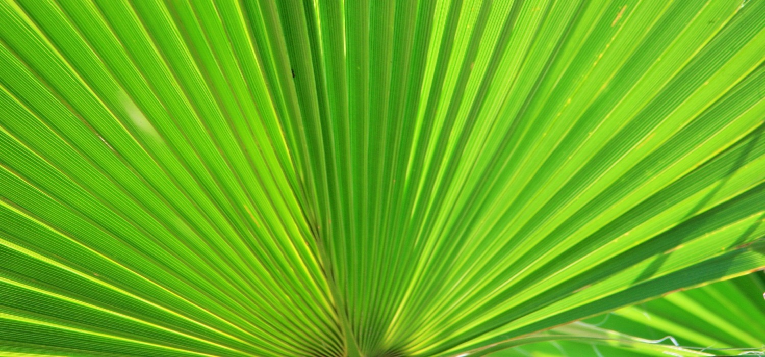 green-palm-283152_1920_mm